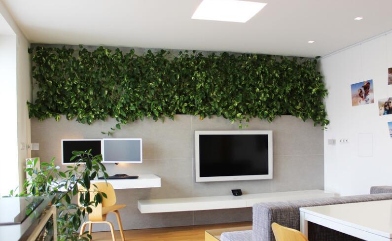 客厅背景墙植物
