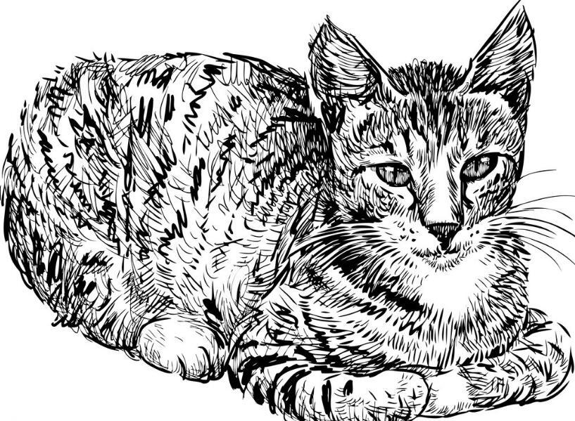 手绘主题猫