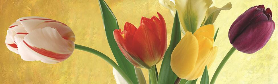 简单漂亮郁金香室内花墙绘图片