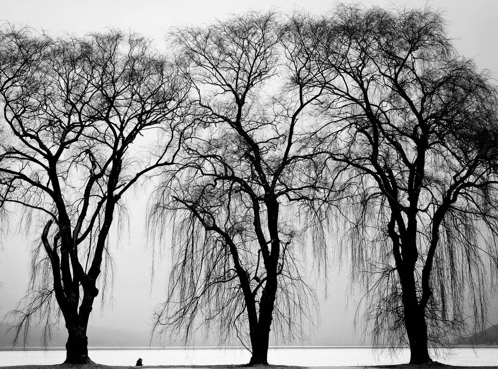 三棵树墙体绘画