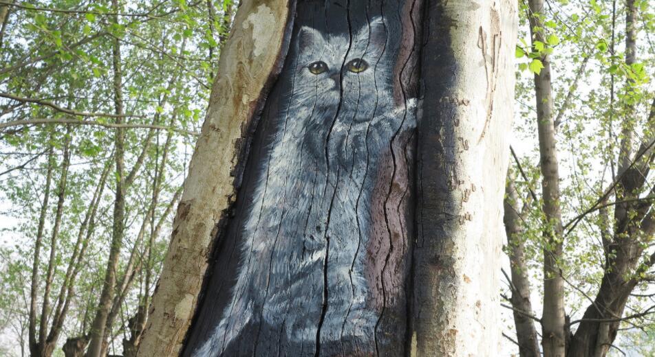 动物墙绘主题之野外之猫