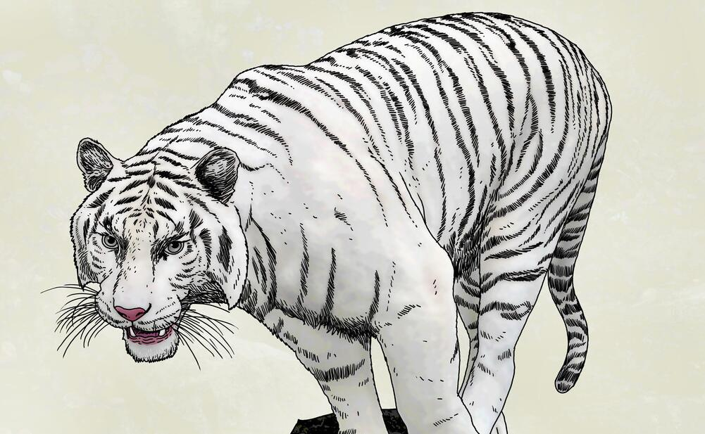 动物墙绘主题之白虎